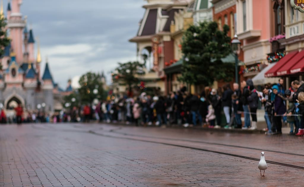 Disneyland While Plus Size