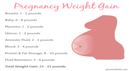 average pregnancy weight gain by week